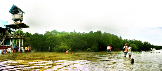 Untitled 1 564x246 Guang Guang Mangrove Park travel and outdoor adventures