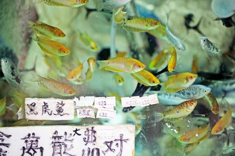 Fish Tank Series